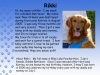 Microsoft PowerPoint - animal team profiles.ppt